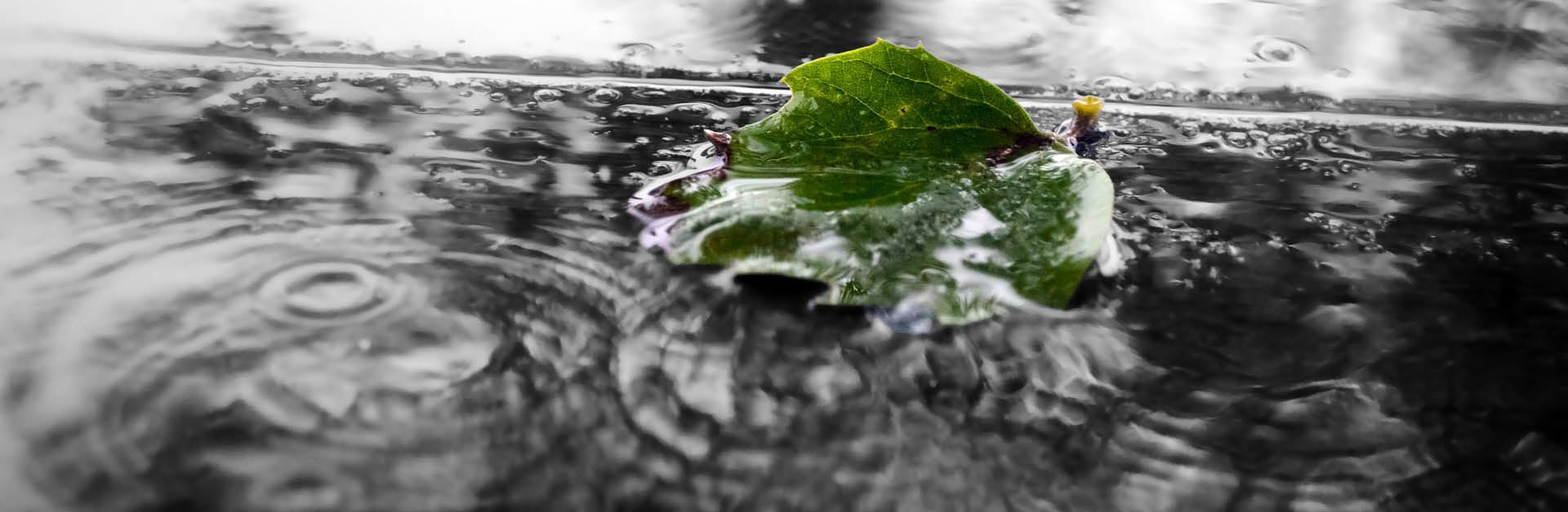 Ideabook 001 Cover Pic - Leaf in Puddle