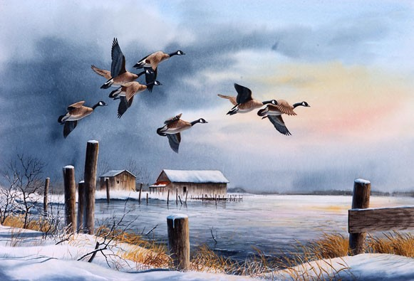 Canada Geese Watercolor